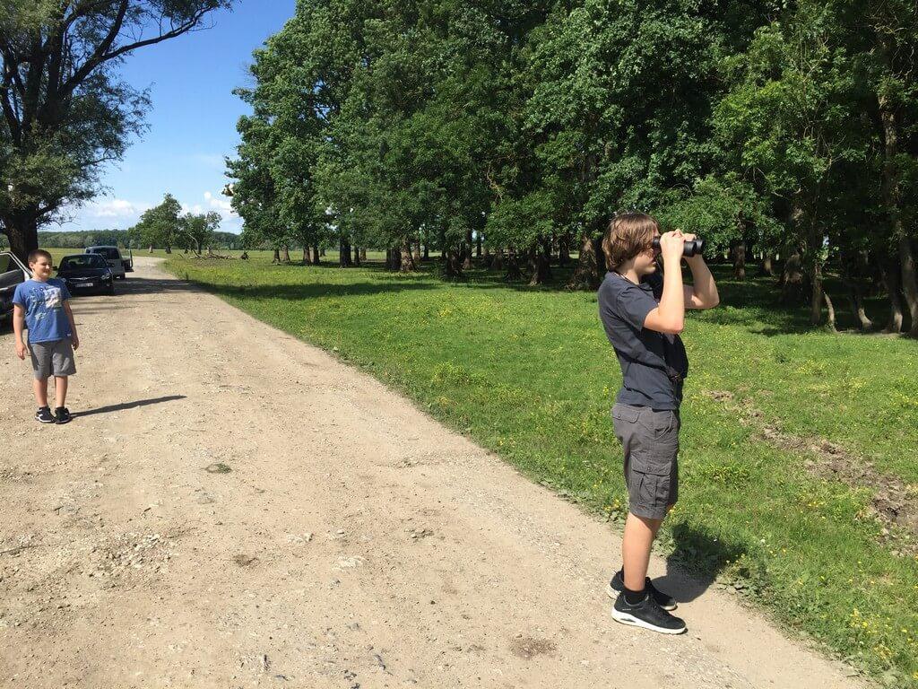 Lonjsko polje - promatranje svinja iz pristojne udaljenosti